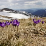 5 Ways to Spring-Clean Your Career