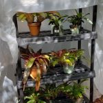 Procrastinators can rig a makeshift greenhouse
